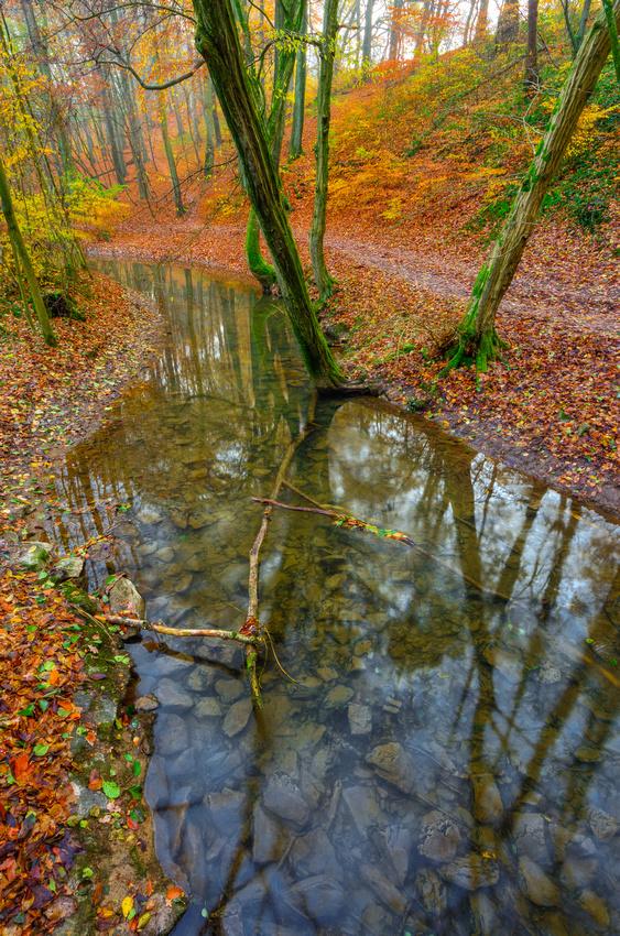 Autumn time ©MarkusLandsmann