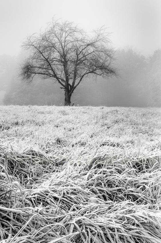 Morning Frost ©MarkusLandsmann