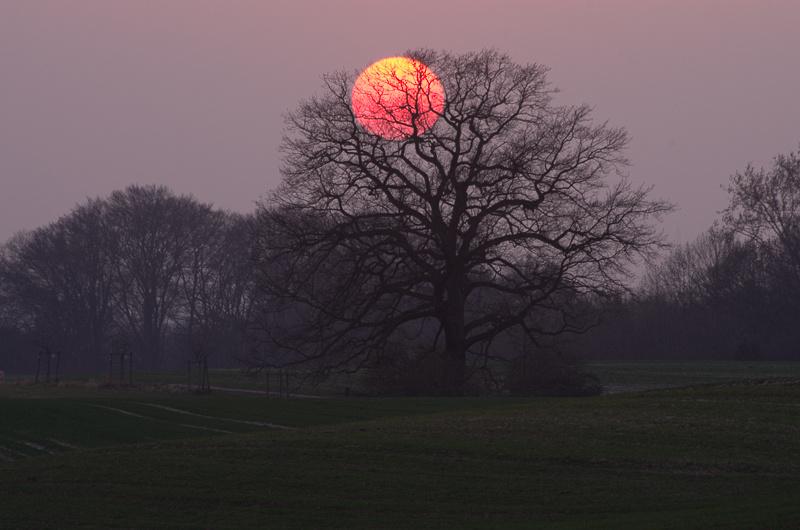 Red sun ©MarkusLandsmann
