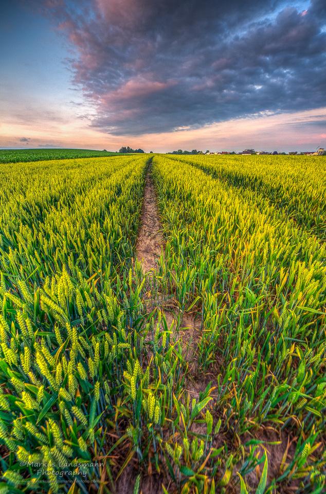 Deep in the field ©MarkusLandsmann